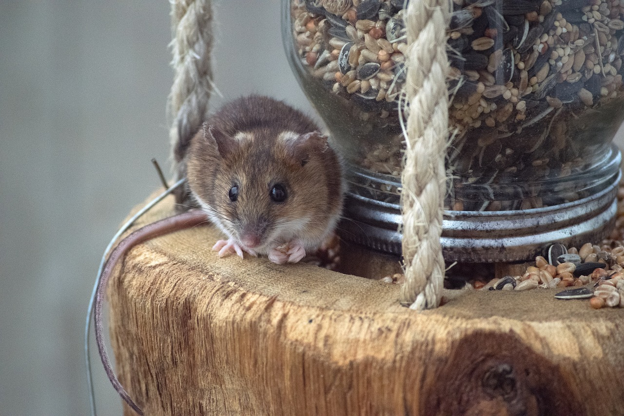 Een muisje bij een pot met zaadjes