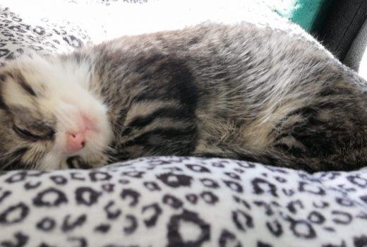 kitten slaapt op de bank